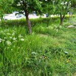 Primăria a declanşat o nouă campanie în municipiul Giurgiu